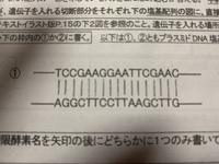 遺伝子組み換えの実験で、目的の遺伝子をプラスミドDNAの中にはめ込む時、プラスミドのどこにはめ込むか教えてください。 遺伝子を入れる場所を作るために制限酵素  EcoRI KpnI SmaI のどれ を使うかも教えて...