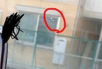 フロントガラス 無数のチッピング フロントガラスに無数の細かいチッピングがあります。1番大きいのでこの赤丸のものです。(写真の関係上で大きく見えますが0.1mm〜0.2mmほどです。  その他0.1mm以下のチッピングが少なくとも10箇所以上あるのですが仕方がないのでしょうか?  赤い丸の部分含め、ディーラーでは小さいため修理もできないのと車検は通るので気にしない方向でのことでした。  車の...