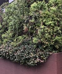 この写真にある2種類の植栽の名前教えてください