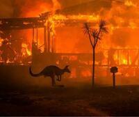 アマゾンやオーストラリアが大規模火災にあって、多大な被害が出ていますね。 前回にも増して今回のも含めると、物凄いCO2の量になると思います。  アマゾンに関しては地球の酸素のうち20%を作っているとの事です...