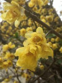 添付画像の花の名前を教えて下さい 本日撮影大阪です