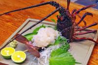 伊豆の伊勢海老の刺身はお好きですか?