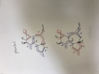 イソプレン則の問題です。Phorbolについてイソプレン単位にわけたとき、正しいのはどちらですか?どちらもhead to tailで結合していて正解のように思えるのですが、、。