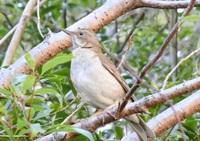 今日散歩をしていて名前がすぐに出てこない鳥を見ました。 この鳥は何という名前かどなたかご存じでしょうか?