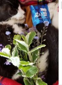 4月5日で7歳になるはずだった、タビ姫が、先月の28日に 天国へ行ってしまいました。 最低でも15年は一緒に生きていけると思っていたけど、いきなりでした。  今は何も考えられません。  愛猫を亡くされた方はどう...