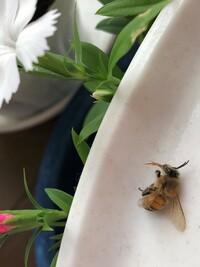ホームセンターの花は蜂に毒ですか? ポット花を購入し、植え替えまでおいてました。次の日、花の横に蜂が落ちてました。片づけて2、3日後、また蜂が落ちていて怖くなりました。この花は蜂を即死させるほどの毒...