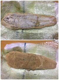 先日、父が拾ってきました。(^_^;) 化石…ですかね? 本物なのかレプリカなのか、一体どういう代物なのか、わかる方よろしくお願いします。