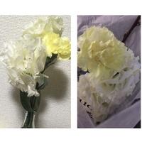 この白いお花の名前わかる方いませんか?  お花屋さんで花を買ったんですが 名前を聞きそびれちゃいました。 黄色のはカーネーションかな?と思うんですが、白いのはわかりません。  どな たか詳しい方教え...