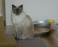 飼い猫ちゃんは 飼い主さんを 何と呼んでいると思いますか? (ФωФ)  ①チミ ②おみゃー ③あにゃた