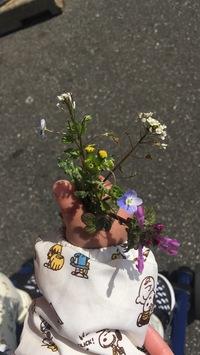 生えてほしい雑草があります 写真にあるようなオオイヌノフグリなどの可愛いお花がつく雑草です。  小さなお花がたくさん生えている状態がとても可愛らしいので我が家のプランターに自生して ほしいなーと思う...
