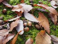 ドングリの落ち葉は、虫も避けるほどに栄養価が低いのですか? どこかでそんなことが書かれているのを読みました、確かドングリの木の落ち葉だったような。 昆虫も食べるのを避けるほどに、栄養価が低いのですか...