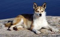 このワンちゃんの犬種を教えてください。   犬種なんて興味ないって人は、この子に名前を付けるとしたら  なんて名前にしますか?