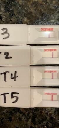 胚盤胞移植 着床 症状