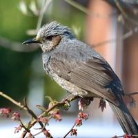 この鳥の名前を教えてください。 撮影場所:愛知県平野部 撮影時間:4月11日 朝8時頃 よろしくお願いします。