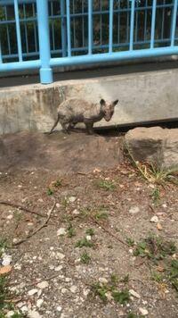 動物博士! この動物はなに? 公園にいて病気なのか、毛も抜け落ちていて、足も怪我しているようでした。