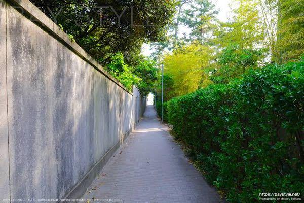 皆さんのおすすめの綺麗な土手の道を教えてください あと、写真のような道を歩くのが好きなんですけど、このような写真の道を知っていたらどこにあるか教えてください!