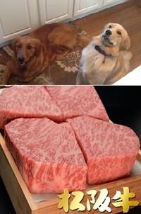 飼い犬に毎食松坂牛を与える意味ってありますか? 以前テレビで見たのですが、人気芸能人の女性が高級住宅街に住んでいて、この画像のようなゴールデンレトリバーなどの血統書付きの犬を3匹飼っていました。  ...