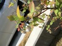 全体像は細い木の様です。この植物の名前を教えてください。