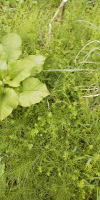 このデカい葉っぱの植物の名前を教えて下さい