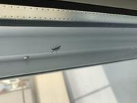 ベランダに虫がいるのですが、なんの虫かわかりますか?