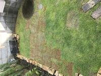 TM9という芝生を貼ったのですが、最初から一束だけ元気がないのがありました。在庫が無くて仕方なく購入したのですが、これから芝が生えてきますでしょうか?芝生を貼った時期は5月頭です。何 かアドバイスが欲しいです。よろしくお願いします。