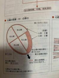 この筋層に心房は二層って書いてますがよくわかりません。 心外膜、心筋層、心内膜の中の心筋層が心房では二層で心筋では三層ということですか? それとも、心房には心外膜と心内膜しかないということですか?
