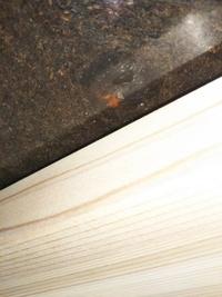 カブトムシの蛹が黒くなりました。生きているのでしょうか? お世話になりますm(_ _)m 3週間程前に蛹になり昨日までは、時々動いていたのですが、今朝見ると黒くなっていました。  ケース の底に蛹室を作り、体の一部しか見えないのですが、体は黒く、オレンジ色の箇所も見られます。  数日前から何か液体のような物が少し出てるようにも感じられました(ケースと蛹が接する部分が湿っぽくなって...