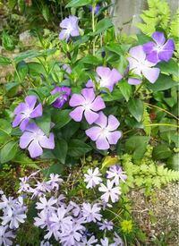 花の名前教えてください 大きい花と小さな花両方教えてください