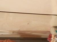 洗面所の鏡のそばにこの写真のクモがいたのですが、無害でしょうか?