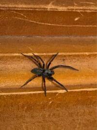 このクモの種類わかる方いたら教えてください。 家の室内で走り回っています。静岡県です。  また、日本で一般的に出会える種類のクモの多くが載っている図鑑があったら教えてほしいです。