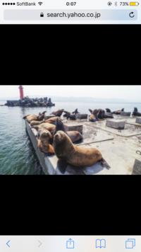 北海道石狩湾新港の防波堤に住み着いてる野生のトドは、なんで防波堤工事を行って、トドが上がれなくしようと考えるなど問題視されてるんでしょうか?野生なのに飼われてる感があって魅力的だと 思いませんか?