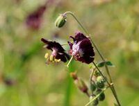 10日程前に北関東の山間部にある施設内で見掛けた花です。 園芸種かと思われますが、名前が分りません。 教えて下さい。