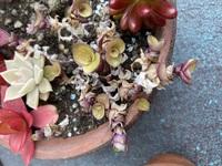多肉植物? 育て方がわかりません。 名前を教えて下さい。