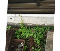 ウッドデッキを置く前の地面の下処理  軒下に、金属製の人工ウッドデッキを置きます。 軒下は、ツタ植物やその他いろいろな雑草が生えているのですが、 ウッドデッキを置くまえの下処理は、 何をしたら良いでしょうか? 基礎沿いに雨樋があって、その下にうっすら土があり、そこから雑草が生えています。 できるだけ綺麗に抜くつもりですが、雑草が生えない砂など処置すべきですか? 詳しい方、宜しく...
