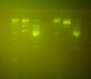 アガロースゲル電気泳動,PCR産物,バンド,原因,写真