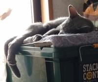 在宅ワークやリモート会議で猫様に部屋を奪われた方はいますか?