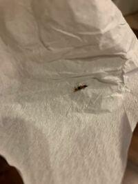 この虫は何という虫ですか? 小指の爪くらいの大きさです。