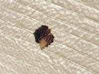 家の中に動物の糞のようなものがありました。 これは何の動物でしょうか?