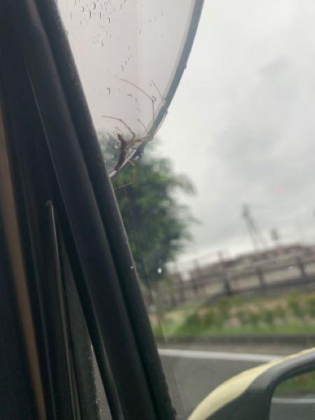 この蜘蛛はなんという名前ですか? 一晩で隣の車との間にかなり大きい蜘蛛の巣を張っていました。 通勤の20キロもずっとついてきて気になったので、知っている方教えてください( ˆoˆ )