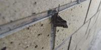 お力お貸しください。この鱗翅目さんのお名前を教えて下さい。