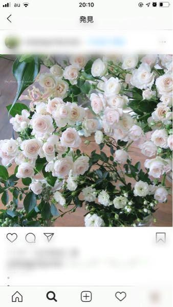 このバラが欲しいです。 名前を教えて下さい。