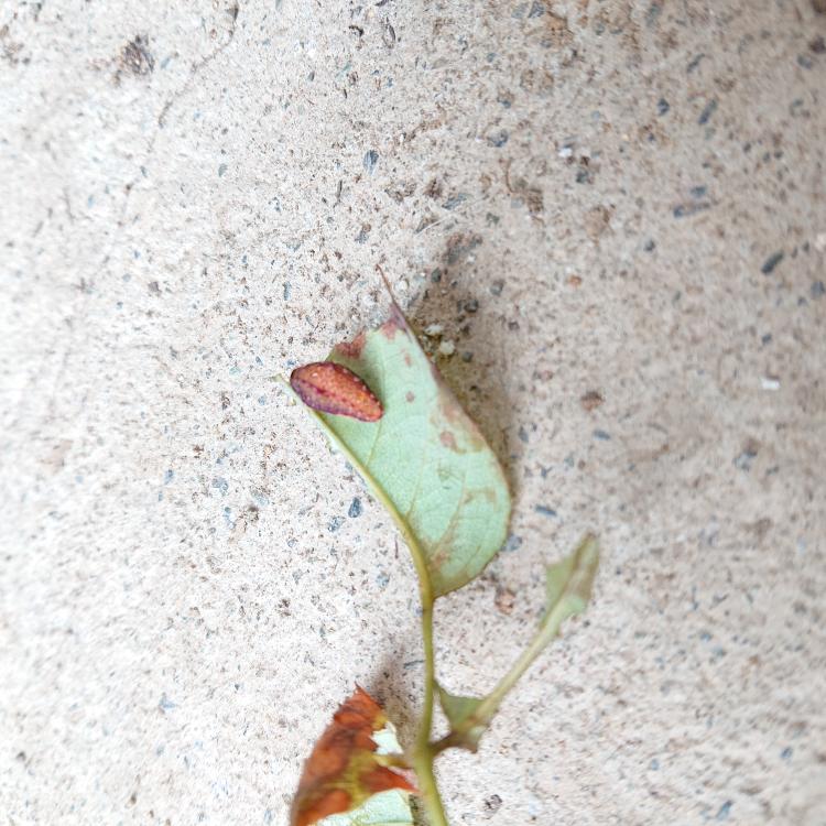 この虫の名前を教えて下さい。