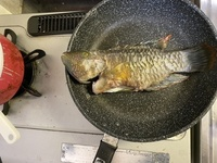 魚、ベラですよね?^ ^ 釣ってすぐに塩焼きにしたところ 白身から粘り気というか、糸を引く感じだったのですが、加熱が足りないのでしょうか? あまり魚を調理したことがないもので。 内臓 、ウロコはとって...