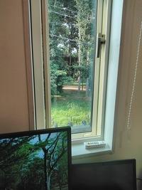 窓の外でクワガタ採集できますか? 部屋の窓から外を撮影しています。 向かいの公園で「バナナ+鏡月」をセットしたら、 ノコギリクワガタの頭部を2匹ゲットすることができました。 https://detail.chiebukur...