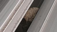 家のベランダに蜂が巣を作りました。ドロバチの巣だと思うのですがいかがでしょうか?