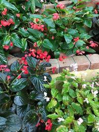 この植物の名前わかる人いますか? 花言葉もあれば教えてほしいです。