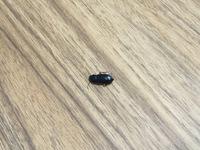 この虫は何か、また、対処法を教えていただきたいです。 1.5センチくらいの虫です。この虫はなんという虫かわかる人がいらっしゃいましたら教えていただきたいです。また、この赤ちゃんもよく 死んでいるのですが、ゴキブリホイホイなどで対処できるでしょうか?