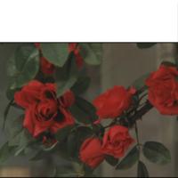 バラに詳しい方、この画像のバラはなんて品種ですか? とある物語の中に出てくるのですが 素人に似ているものが多くて判別がつきません。  もしかしたら架空の作り物かもしれませんが、 一番近いのは何という...