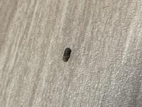 これはゴキブリのふんでしょうか