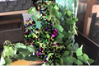 この植物の名前教えて下さい。 (葉っぱの画像のみ)  左右のかわいい形してる葉っぱの植物の名前が知りたいです。 裏庭に沢山生えています。